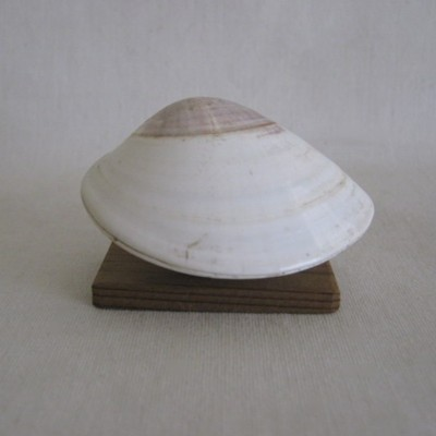 Painted Clam Shell with Ittobori Hina